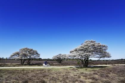 De Groene Afslag en het GNR gaan op zoek naar lievelingsbomen van inwoners het Gooi