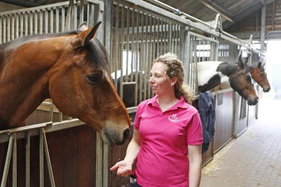 Hoe verder met paarden die voor duizenden euro's eten, maar amper nog voor inkomsten zorgen: stress bij manege Hallinckveld in Loosdrecht [video]
