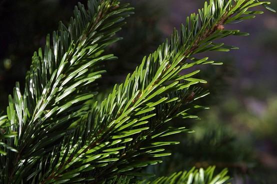 Kerstboom met statiegeld wordt door Groene Afslag teruggezet in natuur