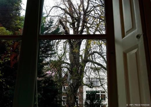 Verenigde Naties planten boom voor Anne Frank