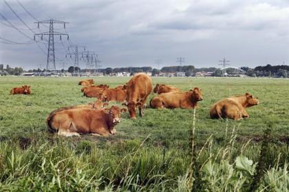 Plan voor mega-zonneveld met 83.000 panelen in Loenersloot stuit op fel verzet inwoners polderdorp