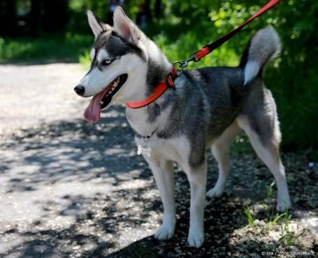 Dierenorganisaties starten 'hondenmarktplaats'